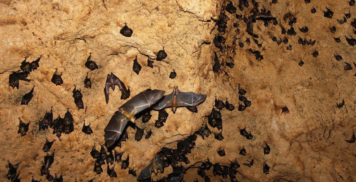 bat_cave